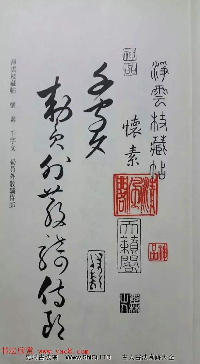 罕見的懷素草書《千字文》淨雲枝藏帖(共49張圖片)
