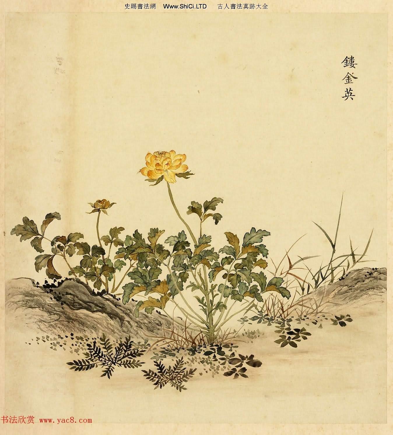 字畫冊頁《海西雜卉》余省繪畫+於敏中書法
