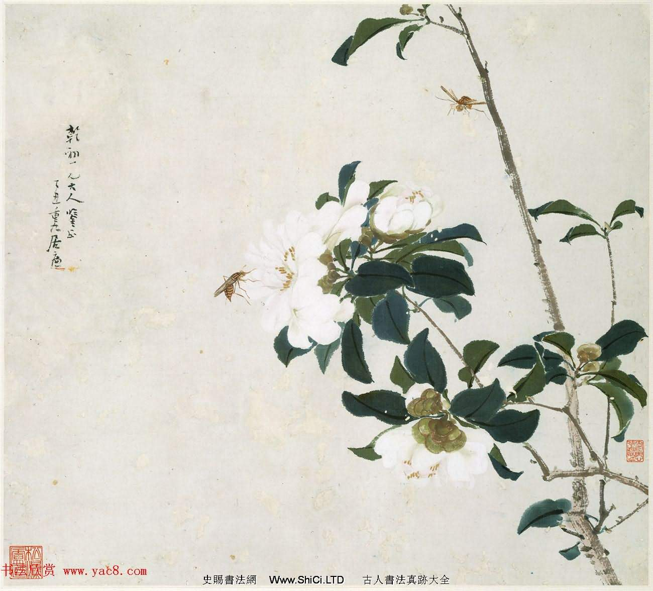 清代居廉花卉蟲草冊頁八開(共8張圖片)